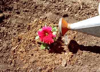 البتونيا الرائعة البتونيا 46.jpg