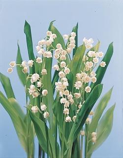 انواع الزهور معلومات الزهور للزهور